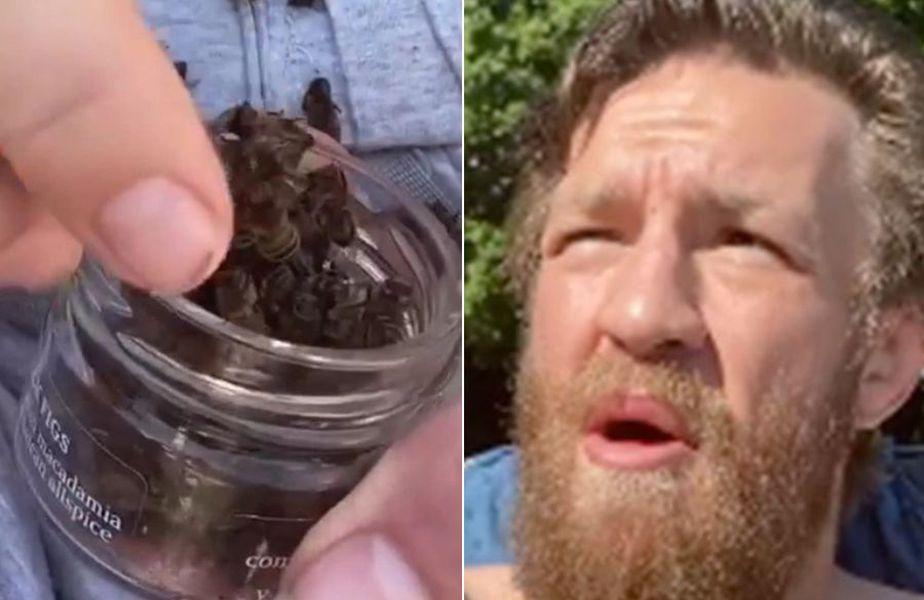 Conor McGregor a mâncat o albină moartă