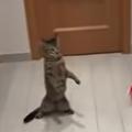 Un fan al lui Juventus Torino și-a filmat pisica în timp ce apăra ca un veritabil portar