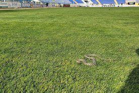 VIDEO + FOTO  Imagini șocante în Liga 1! Ce au văzut jucătorii pe gazon inainte de meci