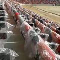 Sigla Clubului Sportiv al Armatei apare pe scaunele de la tribuna oficială