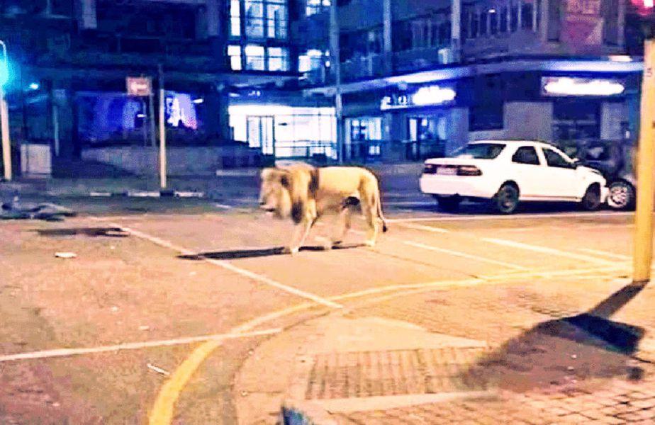 Pe internet a circulat o știre conform căreia Vladmir Putin ar fi eliberat lei pe străzile Rusiei pentru a ține oamenii în case