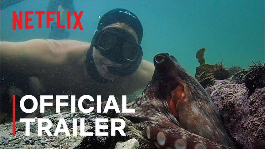 """""""My Octopus Teacher"""", cel mai bun documentar al anului, a reprezentat una dintre marile surprize."""