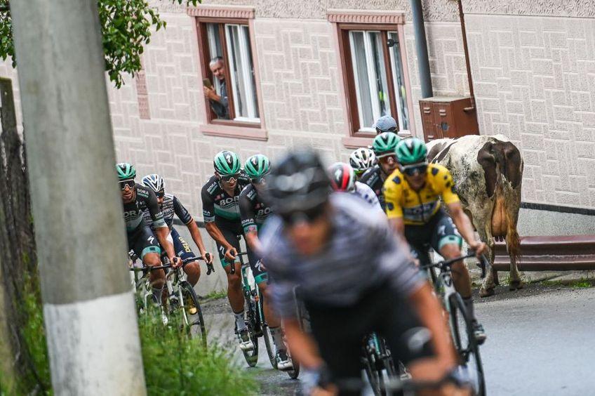 Cicliștii urcă strada, văcuța o coboară, iar de la fereastră pândește fotograful amator Foto Sebastian Marcovici – Focus Photo